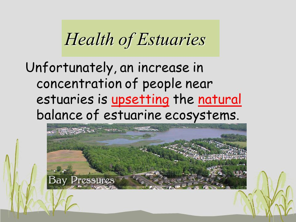 Health of Estuaries Unfortunately, an increase in concentration of people near estuaries is upsetting the natural balance of estuarine ecosystems.