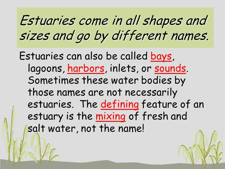 What do Estuaries look like?