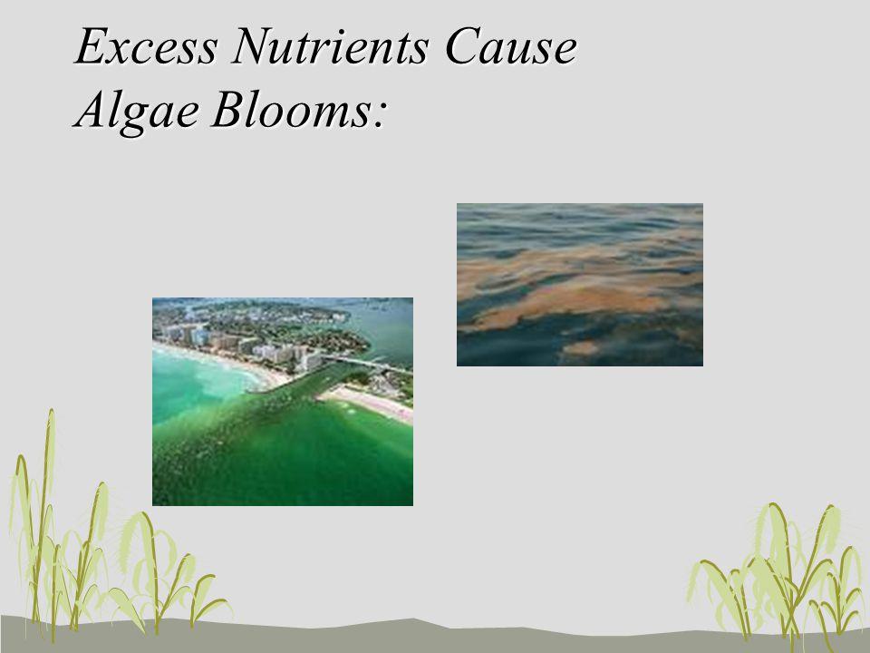 Excess Nutrients Cause Algae Blooms: