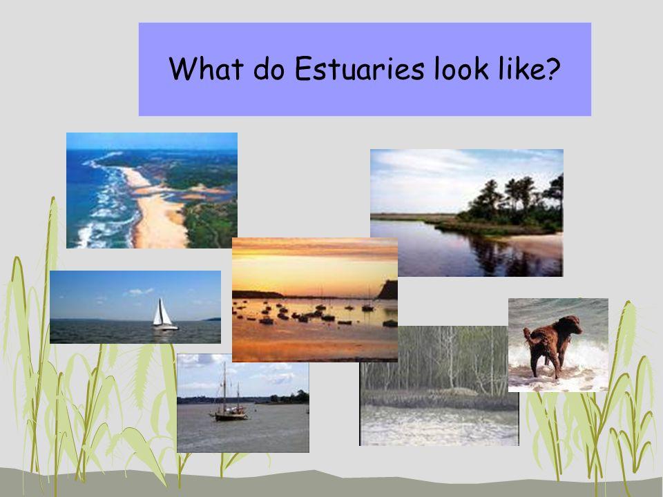 What do Estuaries look like