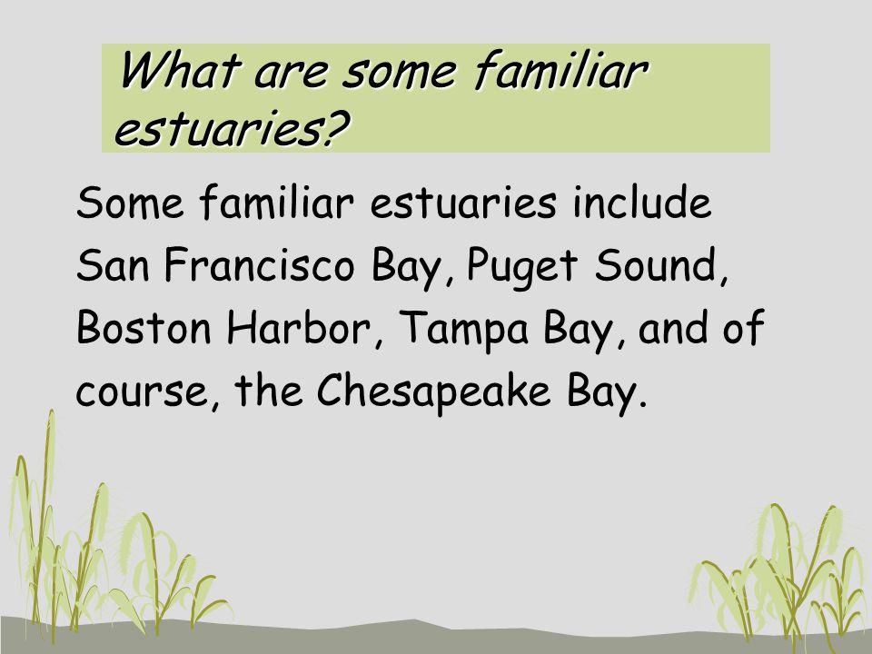 What are some familiar estuaries.