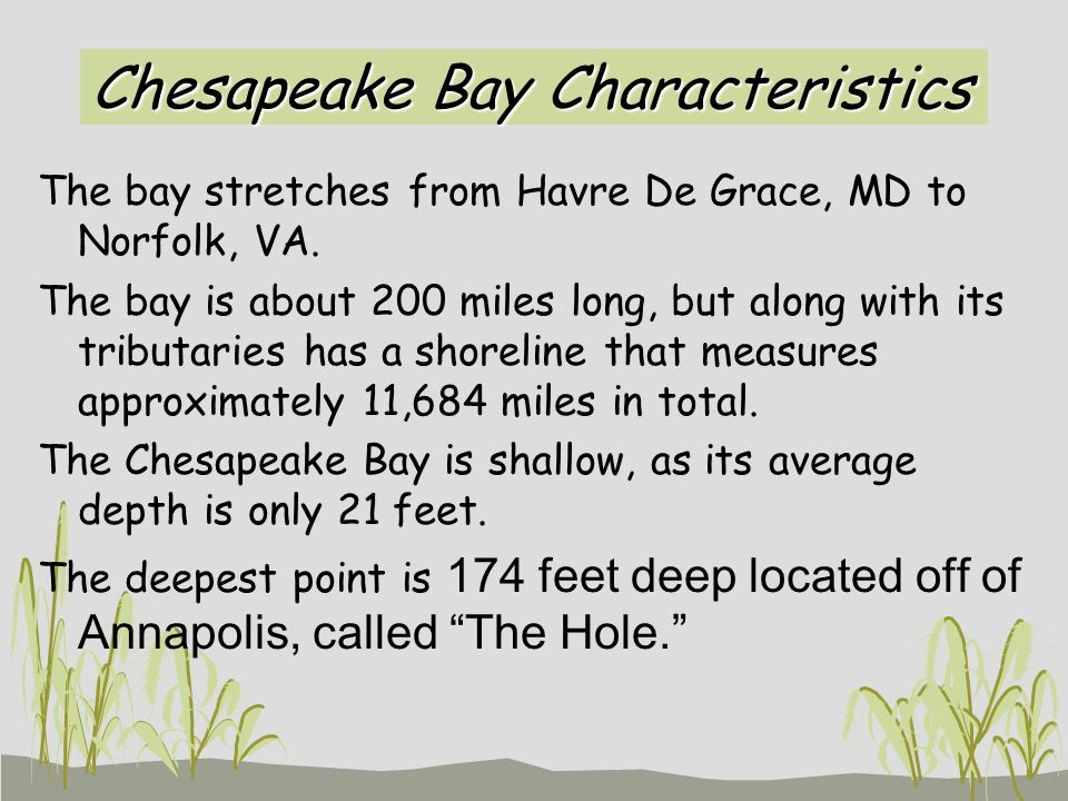 Chesapeake Bay Characteristics The bay stretches from Havre De Grace, MD to Norfolk, VA.