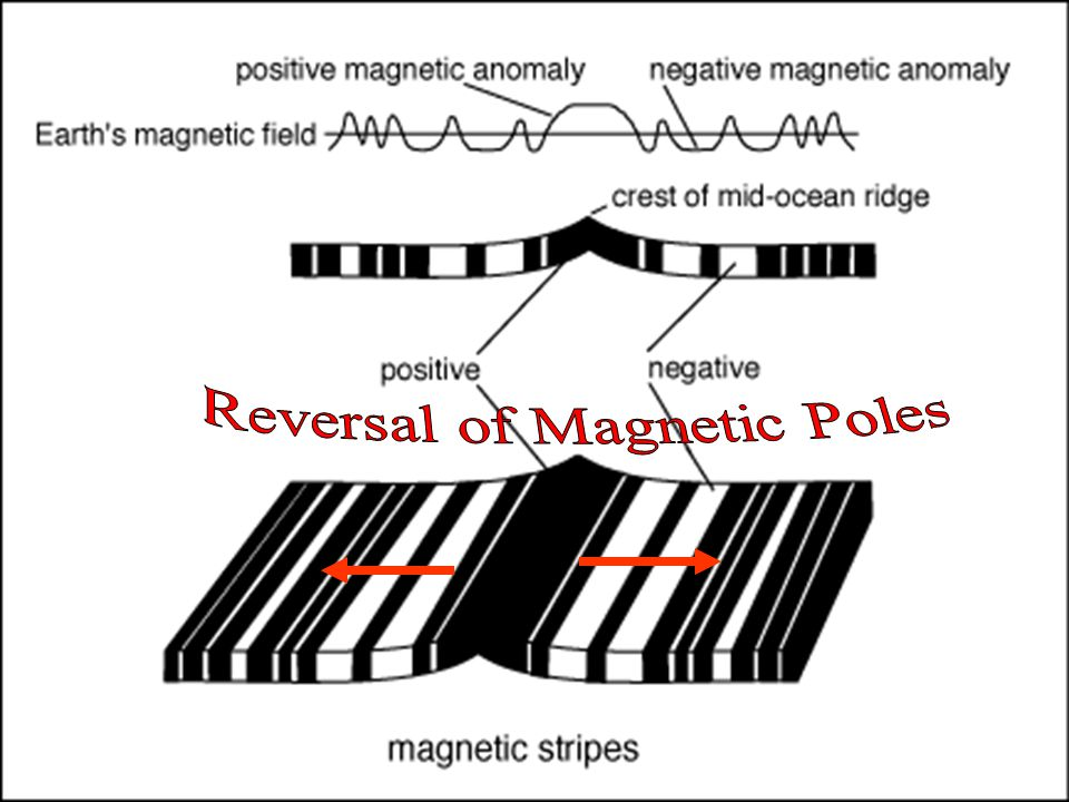 PALEOMAGNETISM- THE STUDY OF MAGNETISM IN ANCIENT ROCKS POLAR WANDERING- AS METALLIC MINERAL GRAINS ALIGN THEMSELVES WITH THEIR MAGNETIC POLES ROCK RECORDS SHOW THAT THE GRAINS REVERSE THE DIRECTION IN WHICH THEY POINT