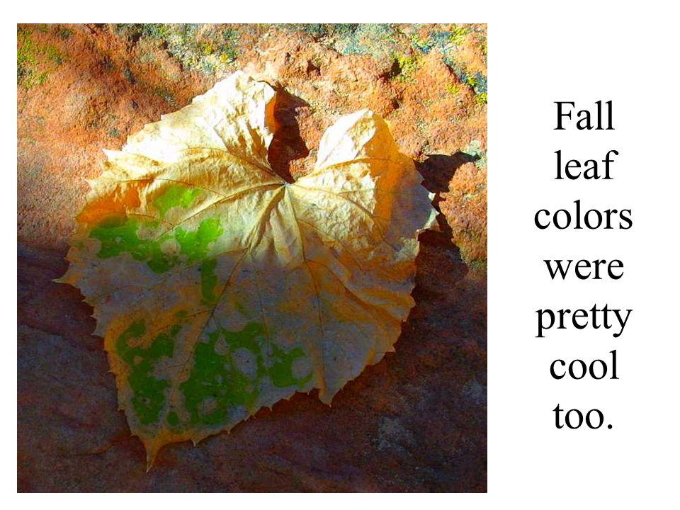 Fall leaf colors were pretty cool too.