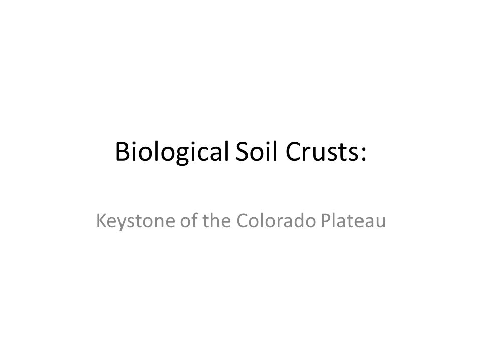 Biological Soil Crusts: Keystone of the Colorado Plateau