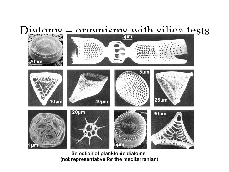 Diatoms – organisms with silica tests