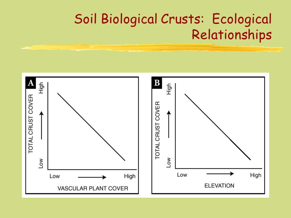 Soil Biological Crusts: Ecological Relationships