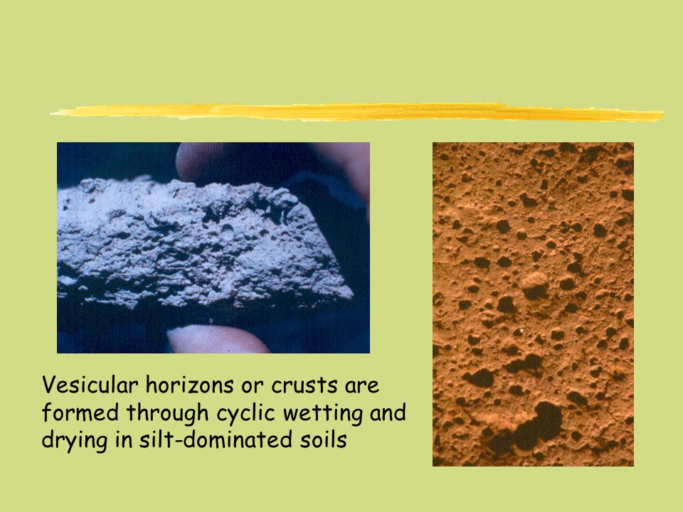 Vesicular horizons or crusts are formed through cyclic wetting and drying in silt-dominated soils