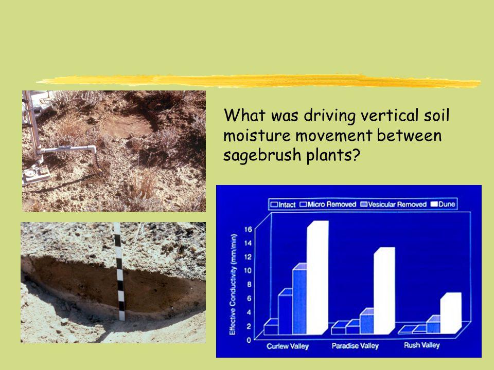 What was driving vertical soil moisture movement between sagebrush plants?
