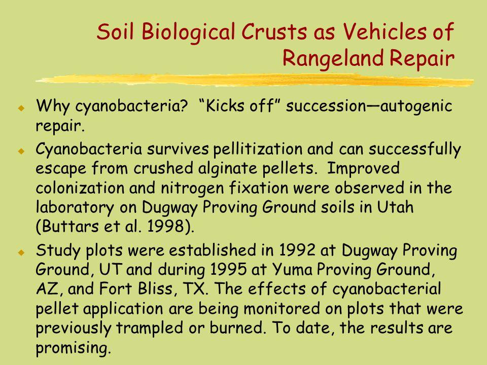 Soil Biological Crusts as Vehicles of Rangeland Repair u Why cyanobacteria.