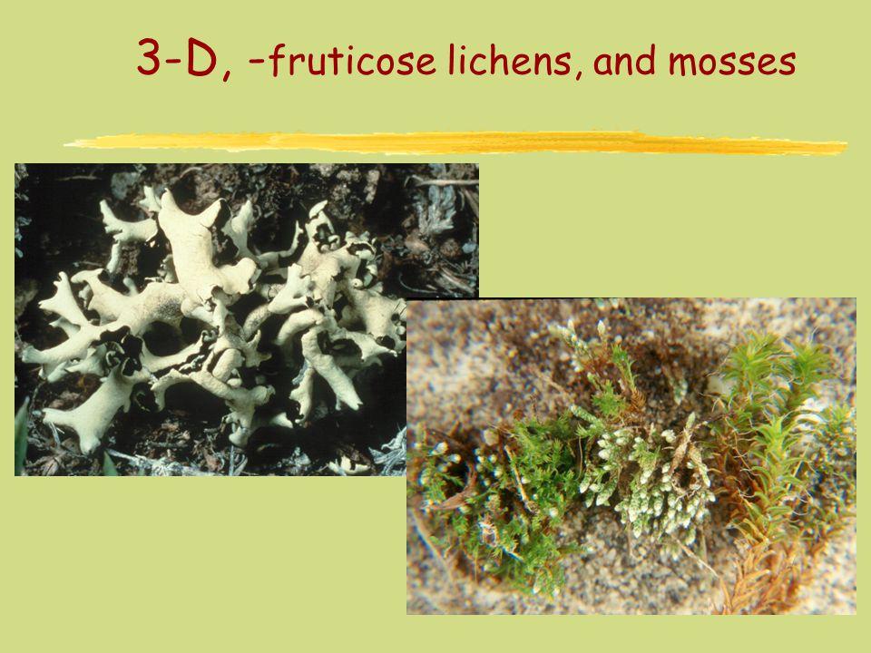 3-D, - fruticose lichens, and mosses