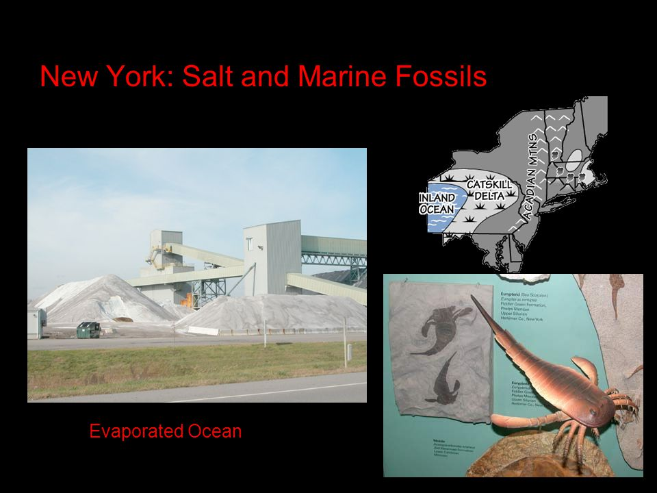 New York: Salt and Marine Fossils Evaporated Ocean