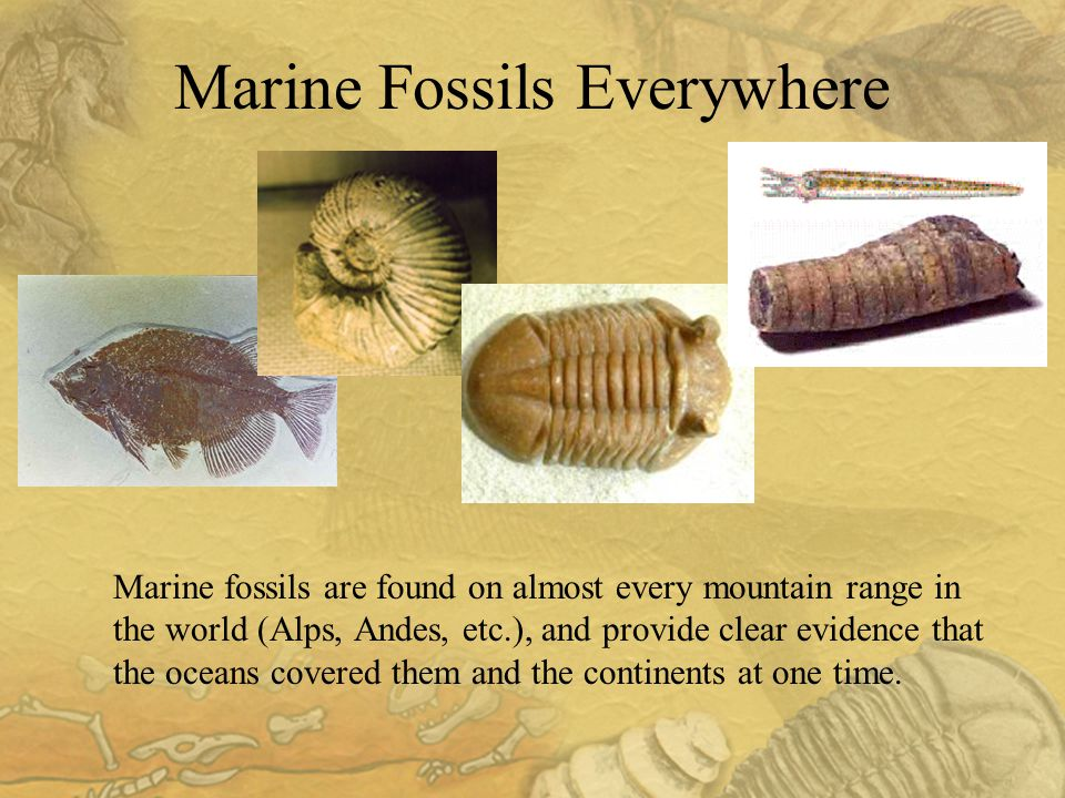 Marine fossils are found on almost every mountain range in the world (Alps, Andes, etc.), and provide clear evidence that the oceans covered them and the continents at one time.