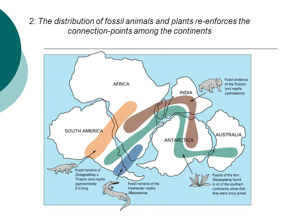 2: The distribution of fossil animals and plants re-enforces the connection-points among the continents