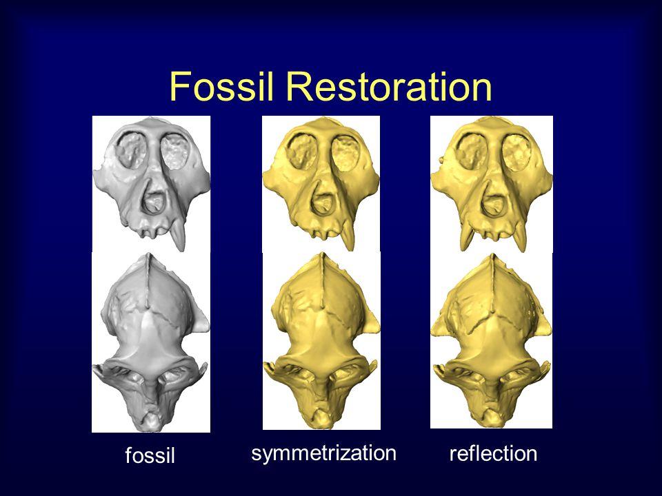 Fossil Restoration fossil symmetrization reflection