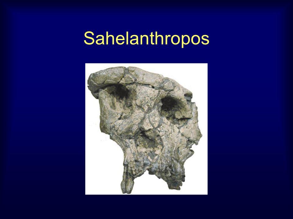 Sahelanthropos