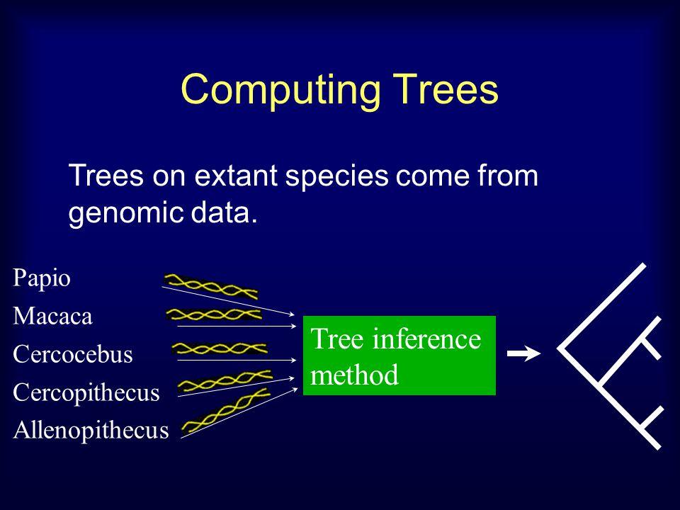 Computing Trees Tree inference method Papio Macaca Cercocebus Cercopithecus Allenopithecus Trees on extant species come from genomic data.