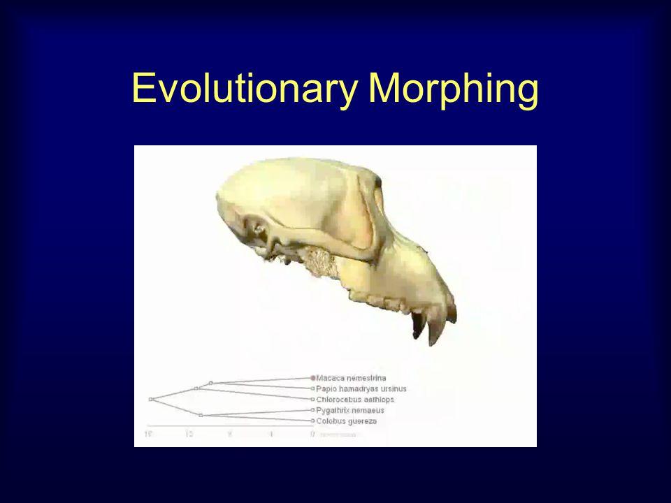 Evolutionary Morphing