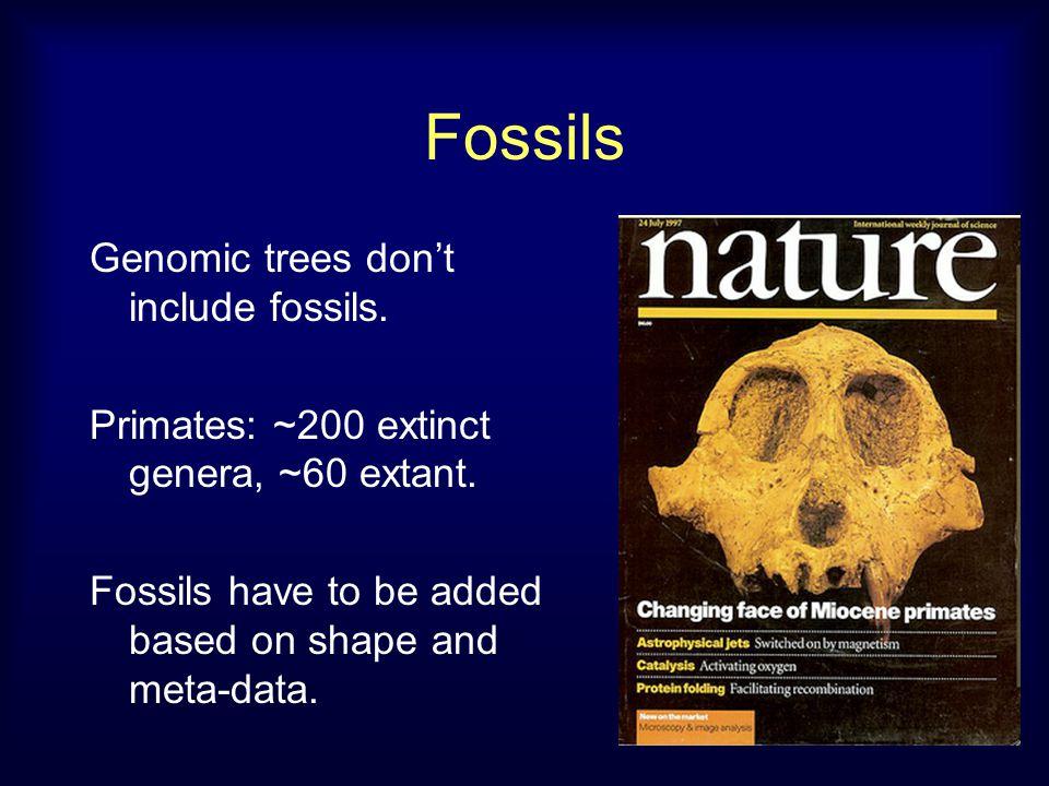 Fossils Genomic trees don't include fossils. Primates: ~200 extinct genera, ~60 extant.