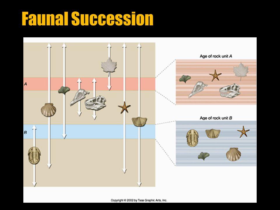 Faunal Succession