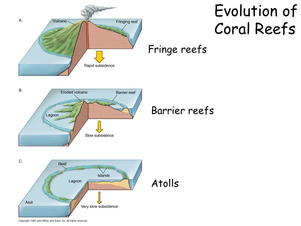 Evolution of Coral Reefs Fringe reefs Barrier reefs Atolls