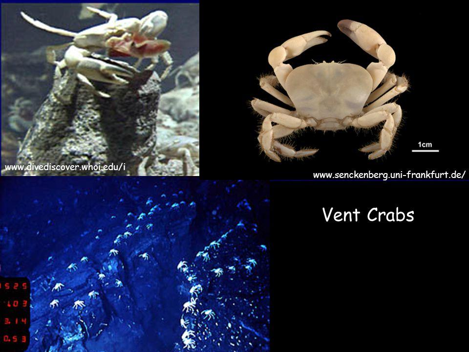 www.divediscover.whoi.edu/i Vent Crabs www.senckenberg.uni-frankfurt.de/