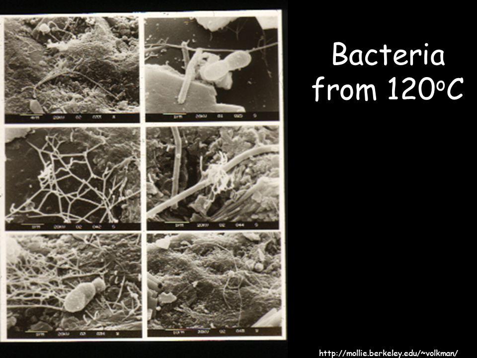 Bacteria from 120 o C http://mollie.berkeley.edu/~volkman/