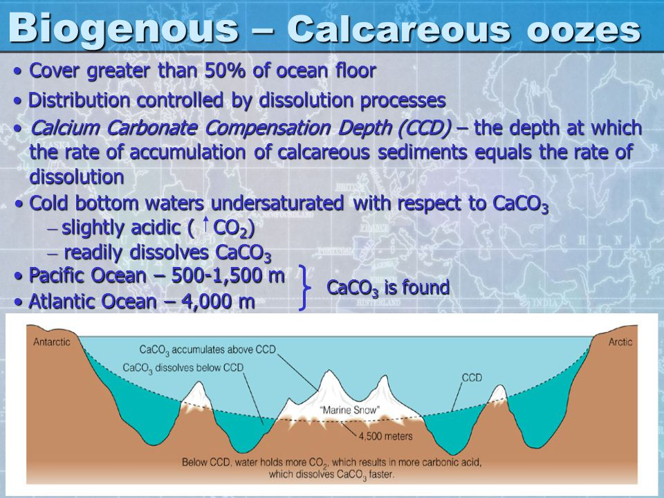 Biogenous – Calcareous oozes Cover greater than 50% of ocean floorCover greater than 50% of ocean floor Distribution controlled by dissolution process