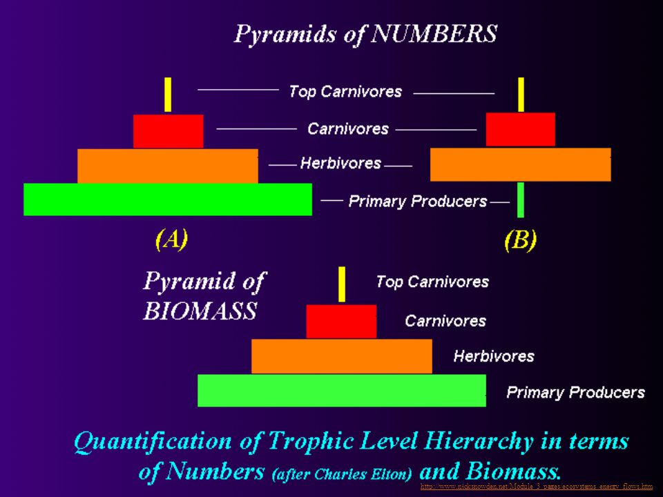 Pyramid of Numbers Number of organisms at each trophic level