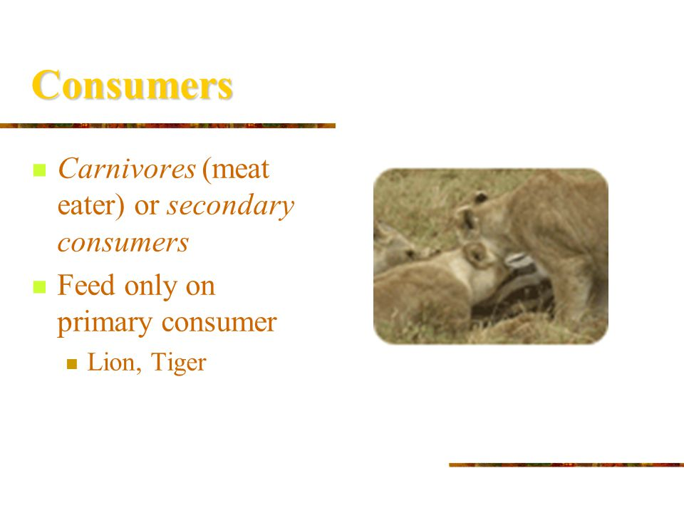 Consumers Herbivores (plant-eaters) or primary consumers Feed directly on producers Deer, goats, rabbits http://www.holidays.net/easter/bunny1.htm