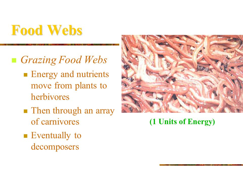 Food Webs Grazing Food Webs Energy and nutrients move from plants to herbivores Then through an array of carnivores Eventually to decomposers (10 Unit