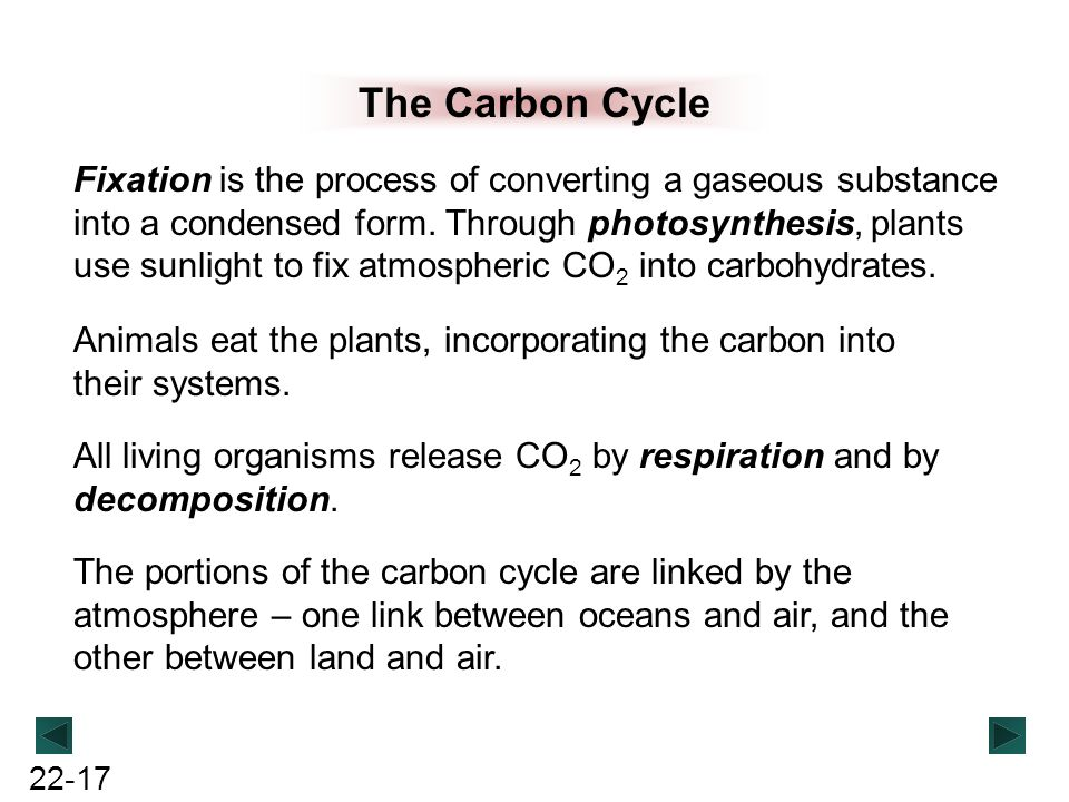 22-17 The Carbon Cycle Fixation is the process of converting a gaseous substance into a condensed form. Through photosynthesis, plants use sunlight to