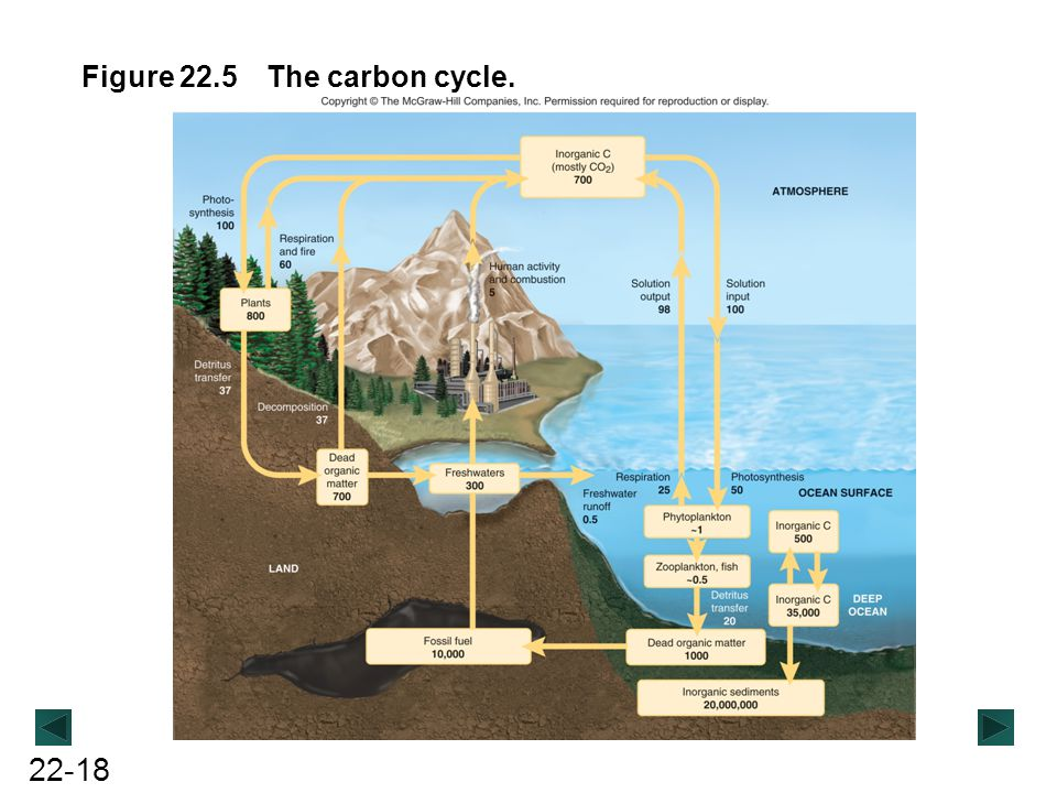 22-18 Figure 22.5 The carbon cycle.