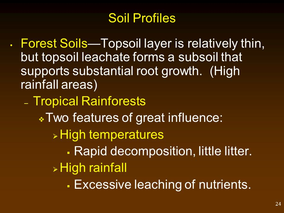 24 Soil Profiles Forest Soils—Topsoil layer is relatively thin, but topsoil leachate forms a subsoil that supports substantial root growth.