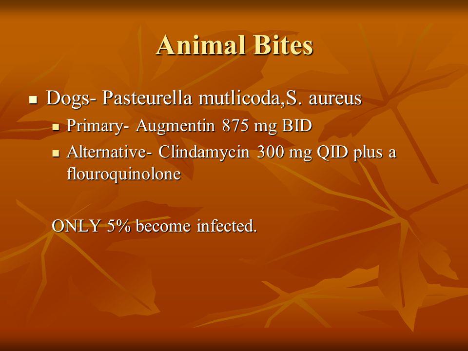 Animal Bites Cats- Pasteurella multocida, S. aureus Cats- Pasteurella multocida, S. aureus Primary Antibiotic Augmentin 875mg BID x 10 days Primary An
