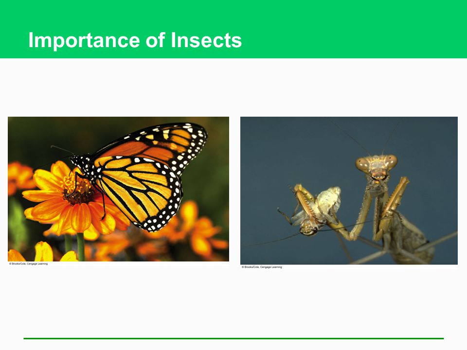 Importance of Insects