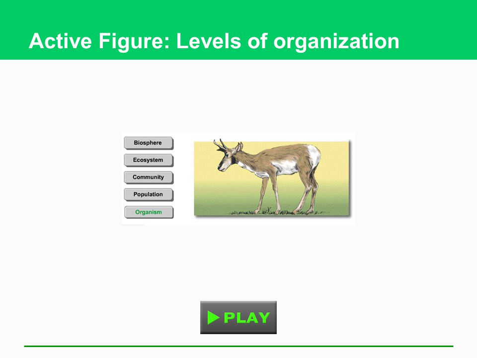 Active Figure: Levels of organization