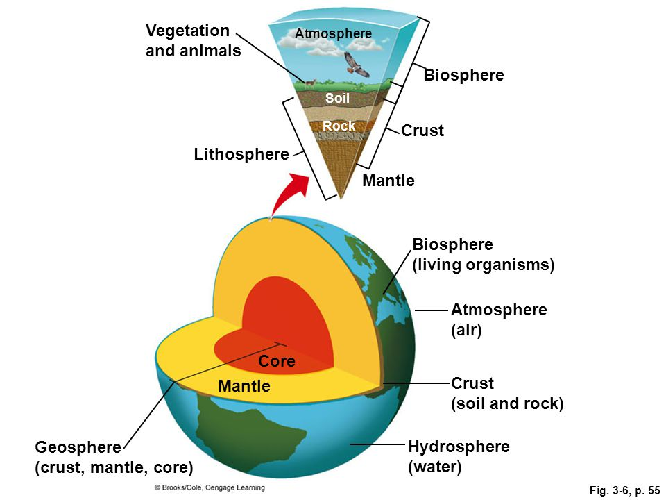 Fig. 3-6, p. 55 Rock Atmosphere Vegetation and animals Lithosphere Biosphere Mantle Crust Soil Biosphere (living organisms) Geosphere (crust, mantle,