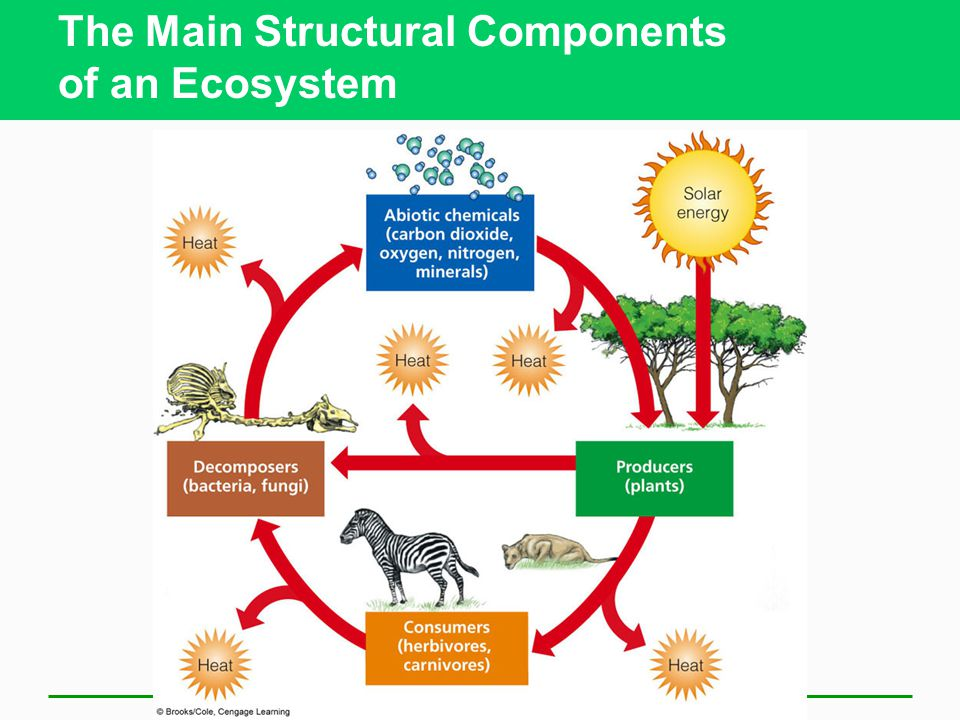 The Main Structural Components of an Ecosystem