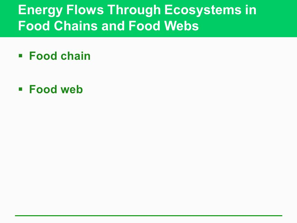 Energy Flows Through Ecosystems in Food Chains and Food Webs  Food chain  Food web