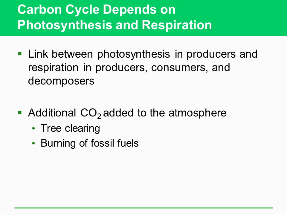 Carbon Cycle Depends on Photosynthesis and Respiration  Link between photosynthesis in producers and respiration in producers, consumers, and decompo