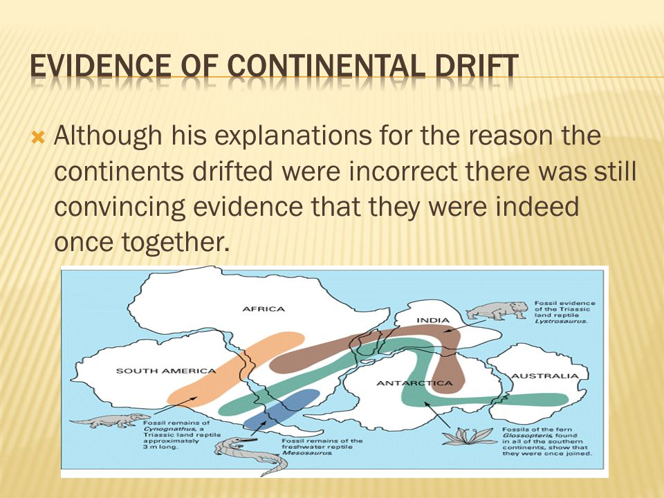  Although his explanations for the reason the continents drifted were incorrect there was still convincing evidence that they were indeed once together.