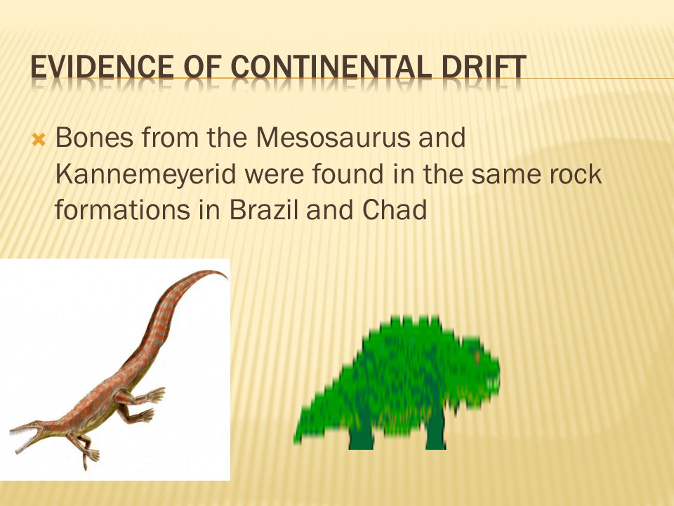  Bones from the Mesosaurus and Kannemeyerid were found in the same rock formations in Brazil and Chad