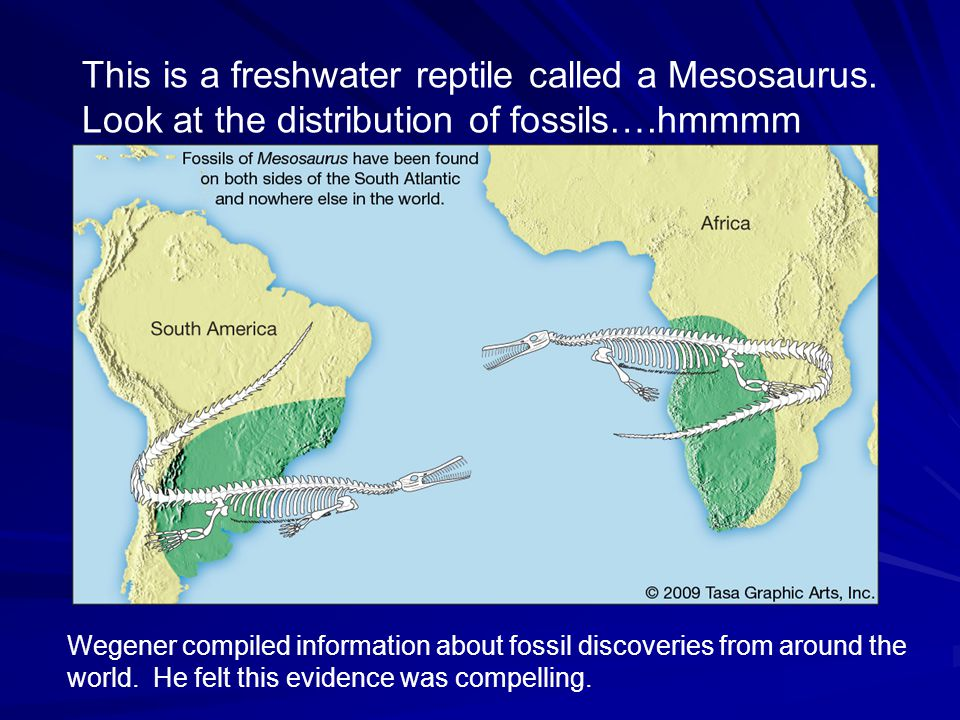 Fossils found on different continents were identical…separated by thousands of miles…how'dey do dat? Evidence for Wegener's Idea