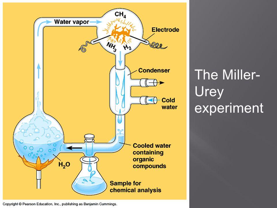 The Miller- Urey experiment