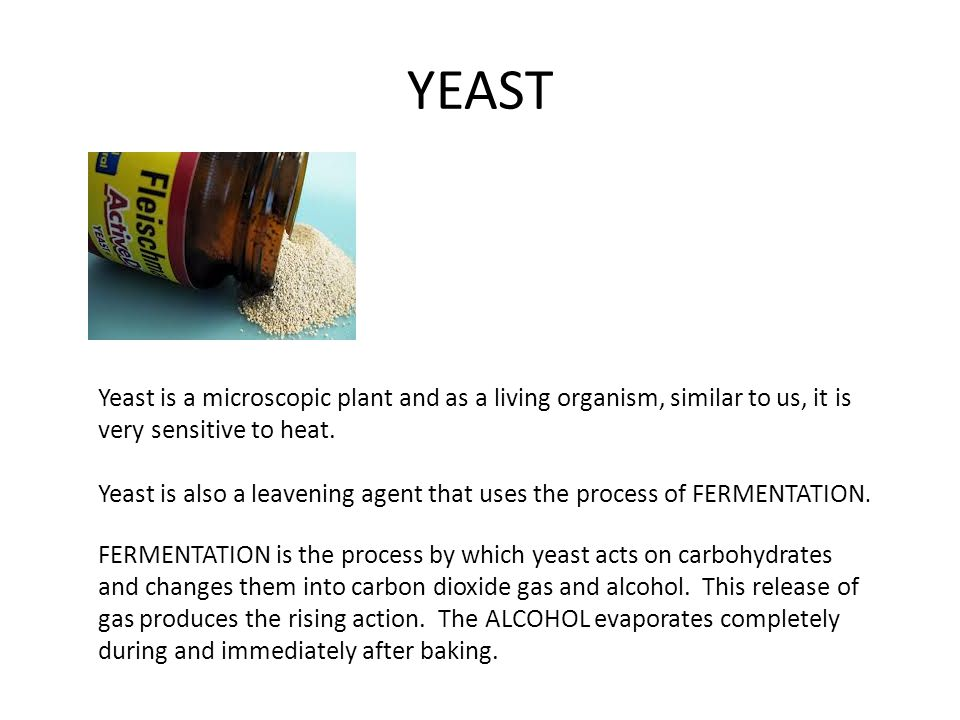 YEAST Yeast is a microscopic plant and as a living organism, similar to us, it is very sensitive to heat.