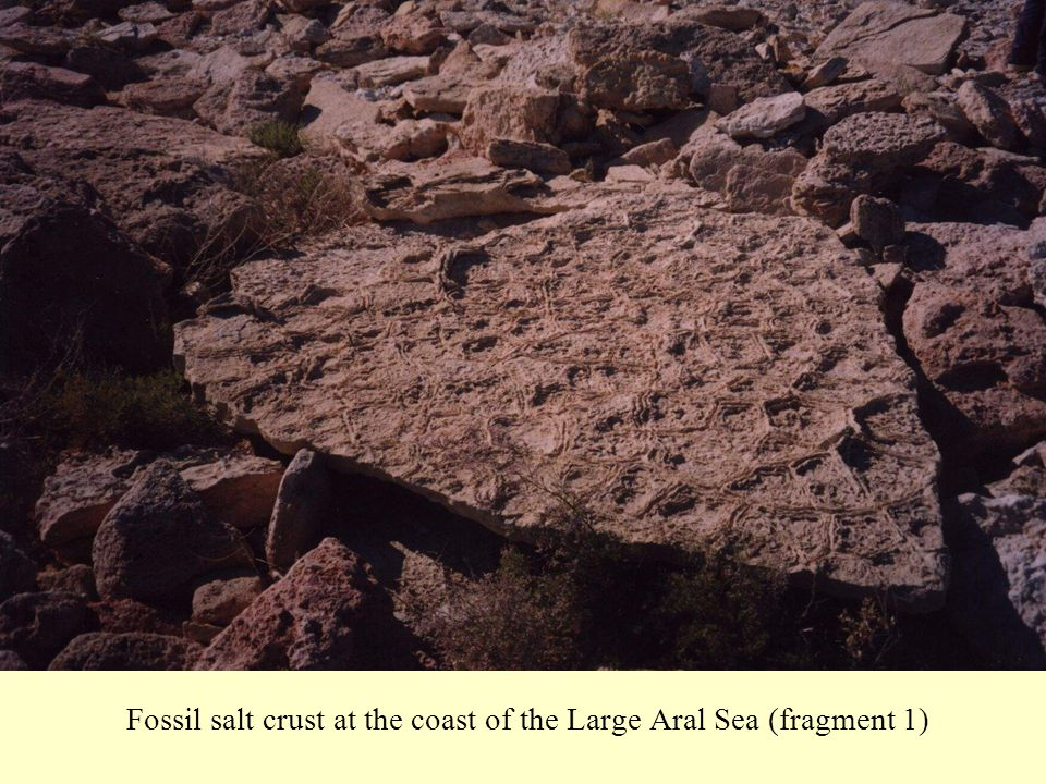 Fossil salt crust at the coast of the Large Aral Sea (fragment 1)