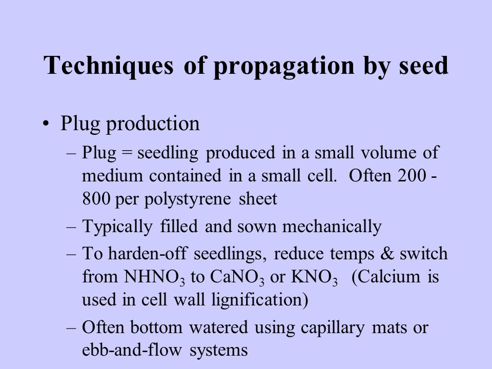 Techniques of propagation by seed Plug production –Plug = seedling produced in a small volume of medium contained in a small cell.