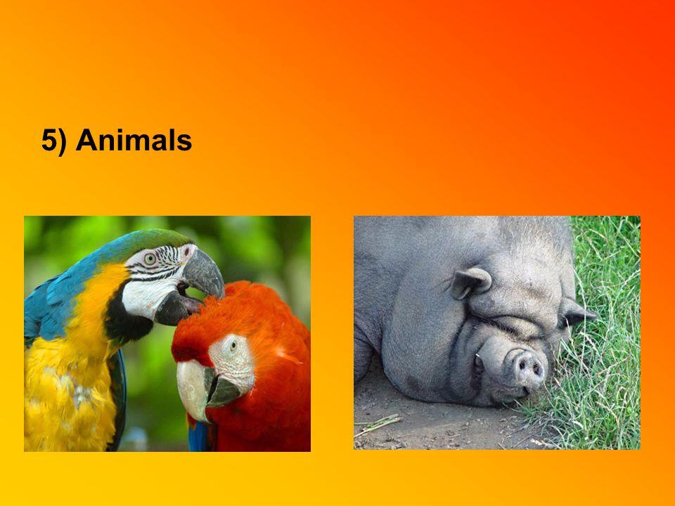 5) Animals