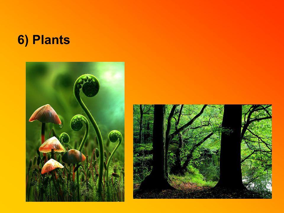 6) Plants